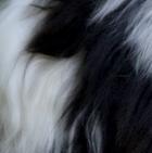Panda PREMIUM Baby Suri Fur-Classic Ornament 12 inches