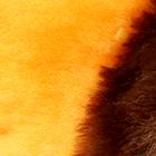 Peach-Various ALPACA Fur-Cotton-Kandi Guinea Pig Ornament 12 inches