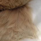 Various Baby Alpaca Fur - Giraffe Ornament 13 inches