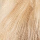 "Baby Alpaca Suri Fur- Standing Alpaca 12"" / Various"