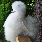 Various BABY Alpaca Fur-Peruvian Ornament 9 inches
