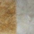 Camel-Natural PREMIUM Baby Suri Fur Fuzzy Slippers