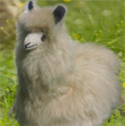 Various BABY Alpaca Fur - Peruvian Sitting Ornament